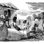 tobacco platation