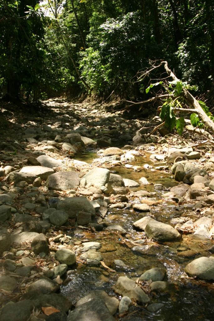 Towards Castara waterfall